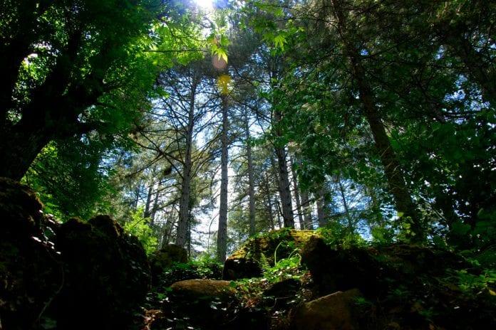 Oksijeniyle Meşhur Kaz Dağları