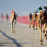Bedevilerin Çöldeki Deve Yarışları, Wadi Rum