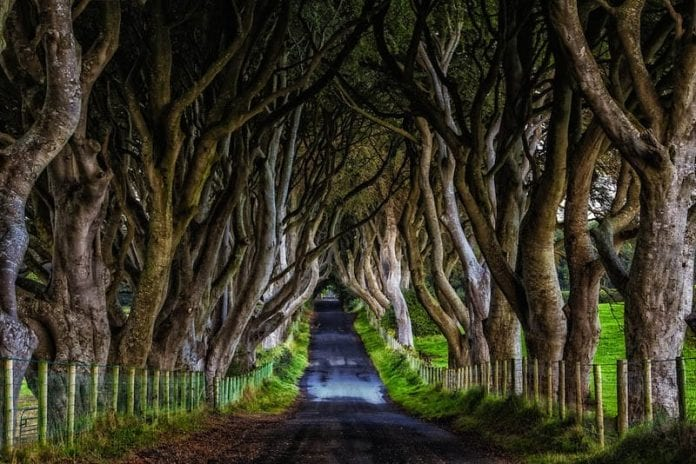 dark hedges yolu