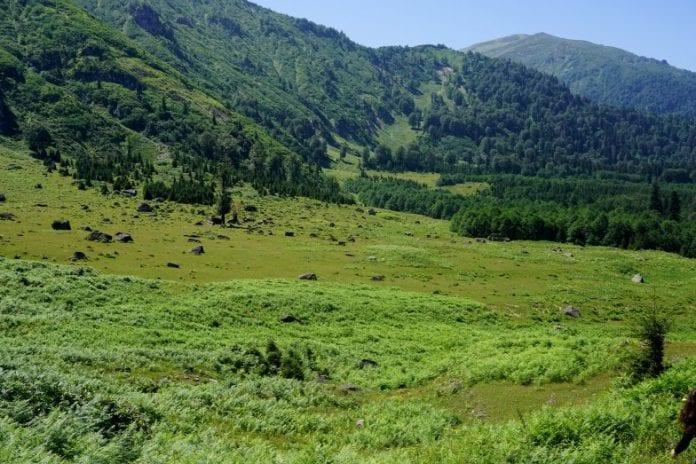 camili gorgit tabiat koruma alanı