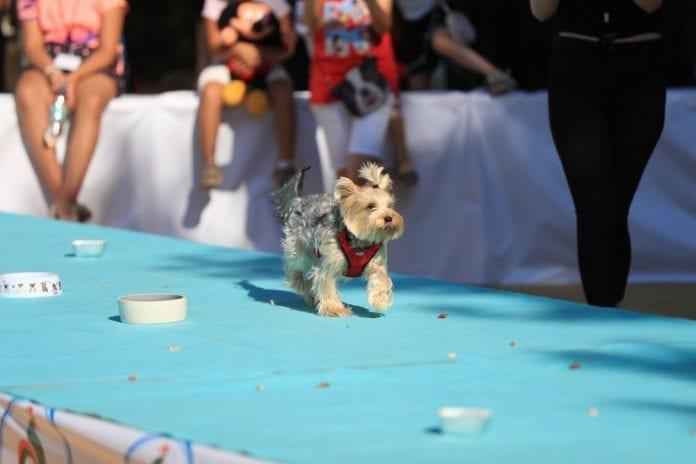 Denizli Pati Festivali