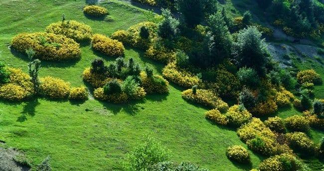 İklim ve Bitki Örtüsü