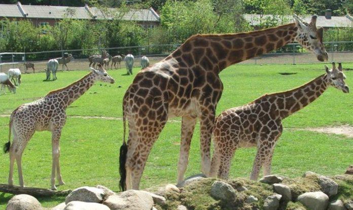 Aalborg Hayvanat Bahçesi