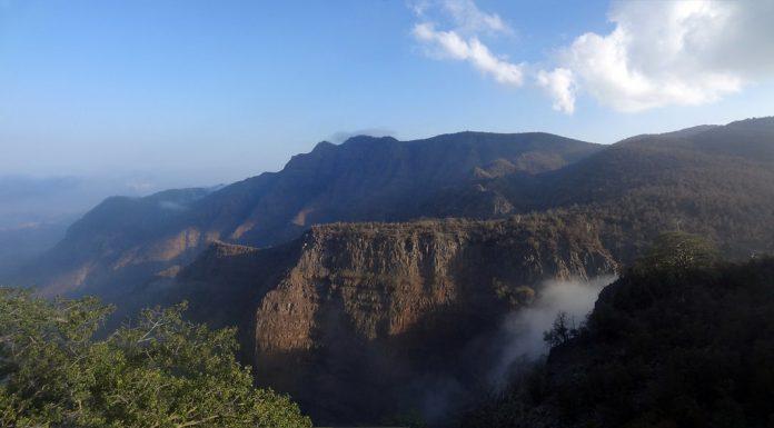 Day Forest Ulusal Parkı