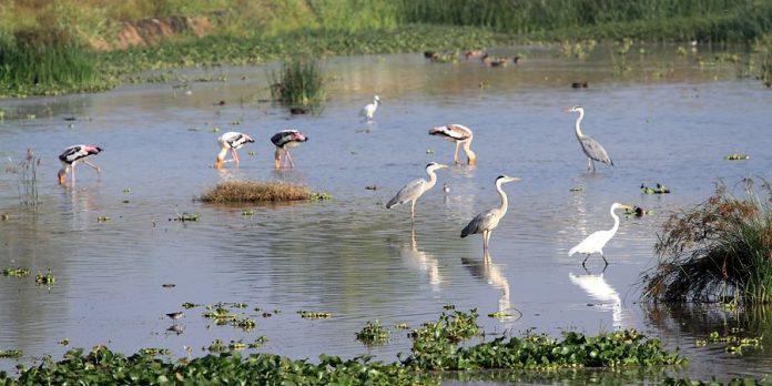 Sur Sarovar Wildlife Sanctuary