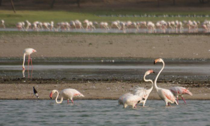 Thol Gölü