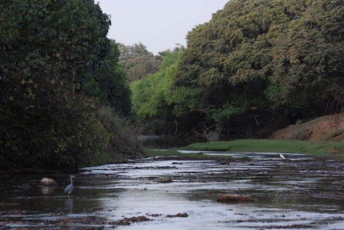 Arli Milli Parkı