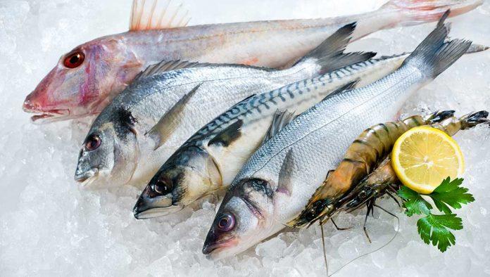 Balık Çeşileri