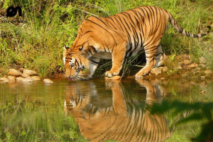 Bardiya Ulusal Parkı
