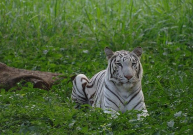 Bir Talab Hayvanat Bahçesi