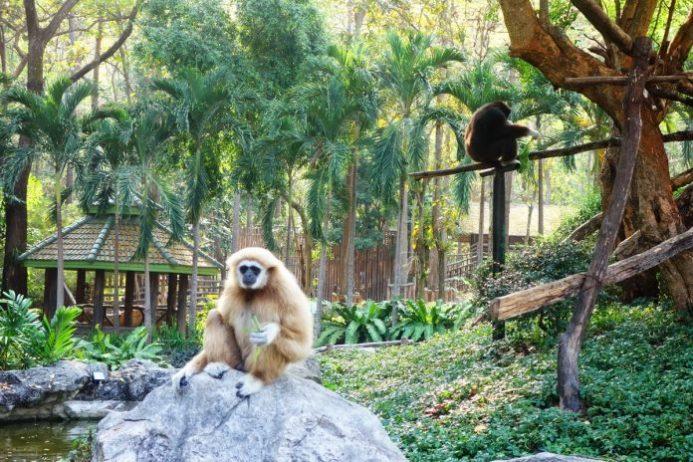 Chiang Mai Hayvanat Bahçesi