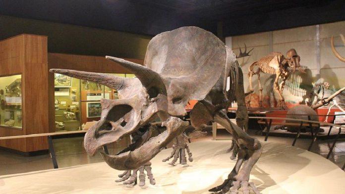 Cleveland Doğa Tarihi Müzesi