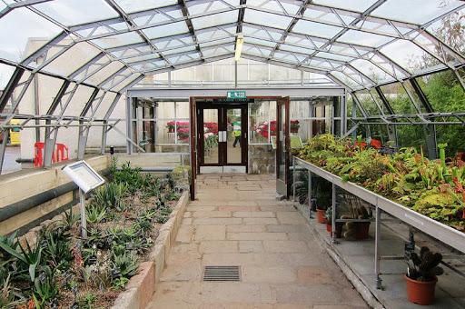 David Welch Kış Bahçesi