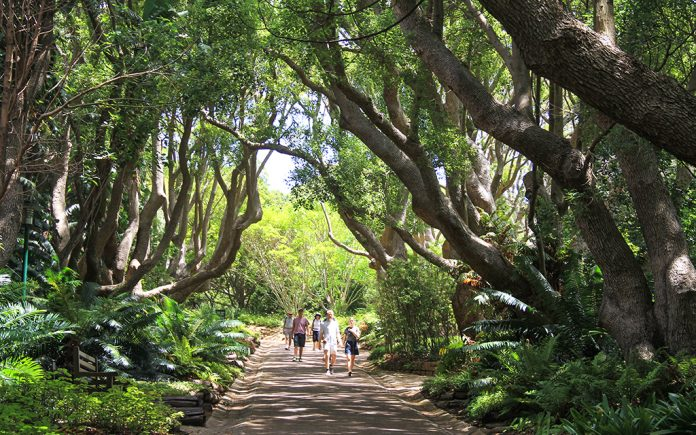 Kirstenbosch Botanik Bahçesi