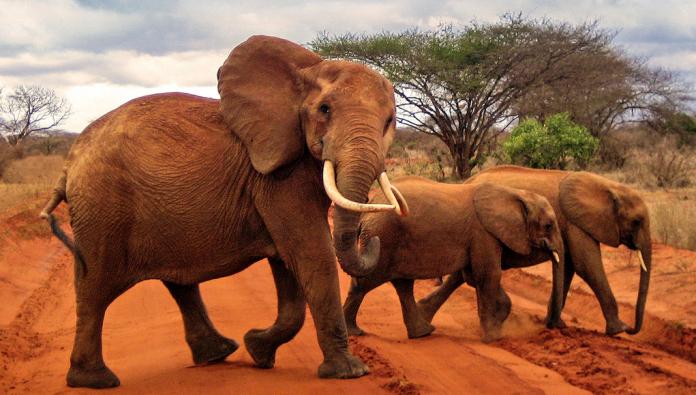 Nairobi Fil Yetimhanesi