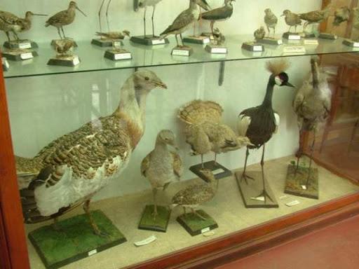 Zooloji Müzesi