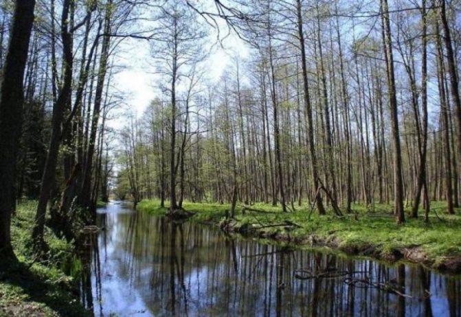 Bialowieza Ormanı