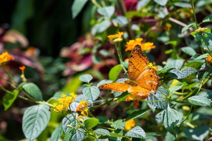 Kelebek Bahçesi kuala lumpur