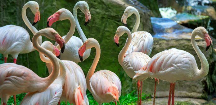 Kuş Parkı kuala lumpur