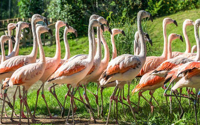 belfast hayvanat bahçesi