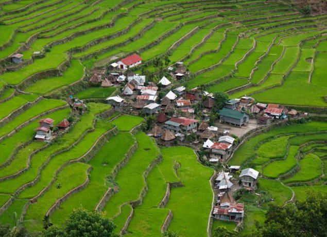 Filipin Pirinç Tarlaları