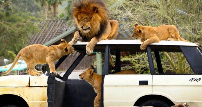 Lahore Safari Park