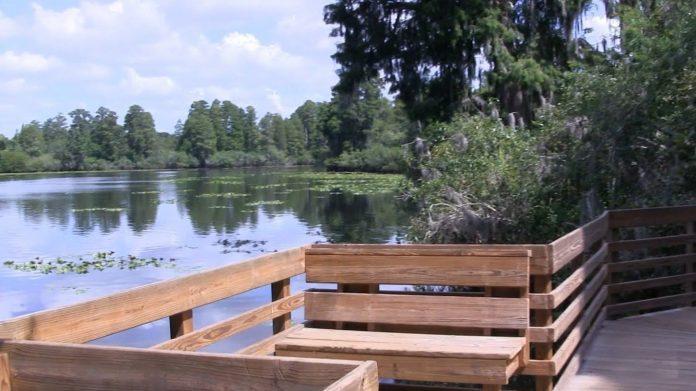 Lettuce Lake Bölgesel Parkı