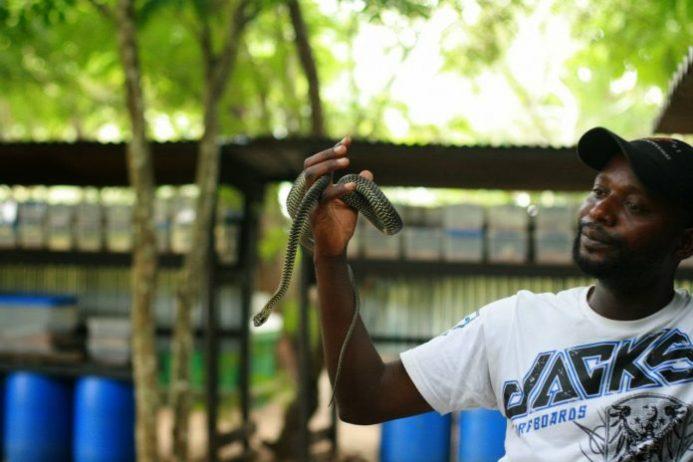 serpents du congo
