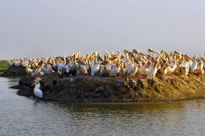 Djoudj Kuş Barınağı