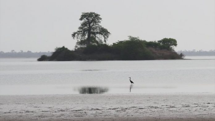 Egret Adası