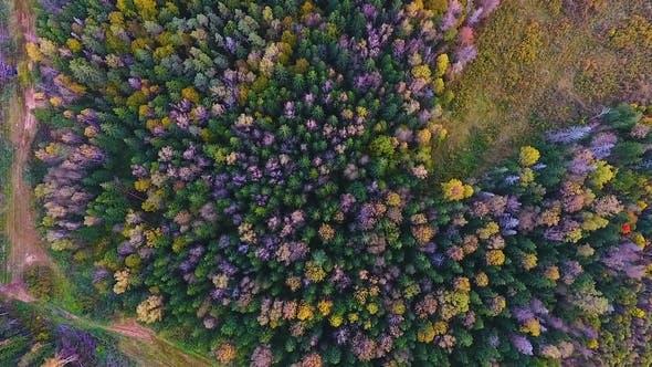 kaluga ormanı