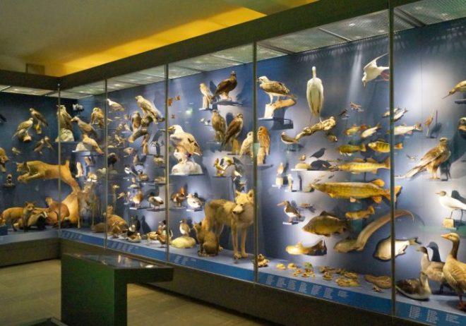 Natural History Museum of Erfurt
