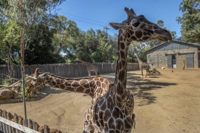 Sacramento Hayvanat Bahçesi