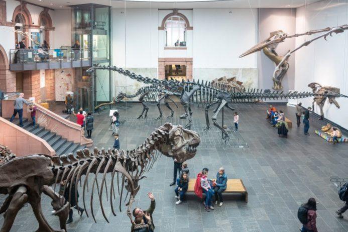 Senckenberg Müzesi