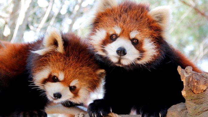 Yagiyama Hayvanat Bahçesi