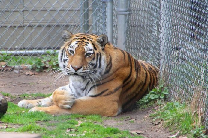 Seneca Park Hayvanat Bahçesi