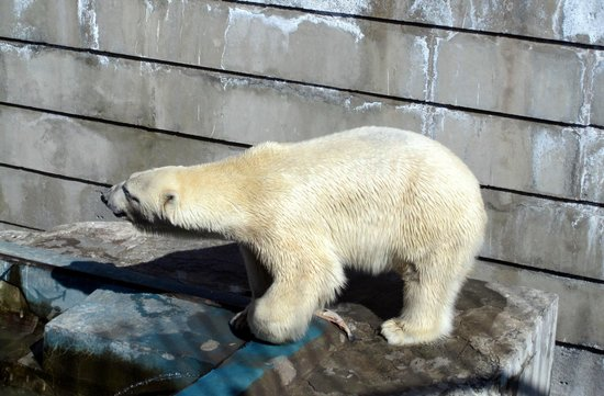 yakateringburg zoo