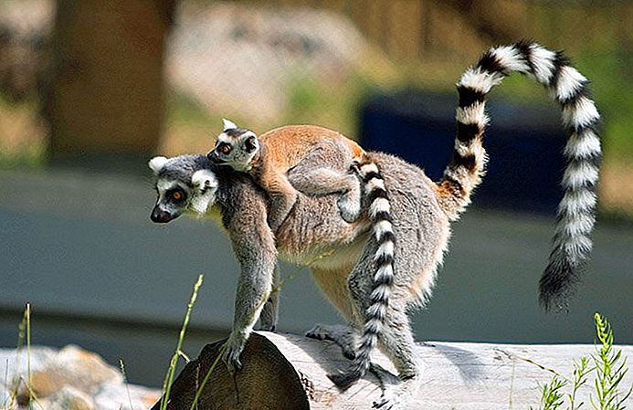 edmonton hayvanat bahçesi