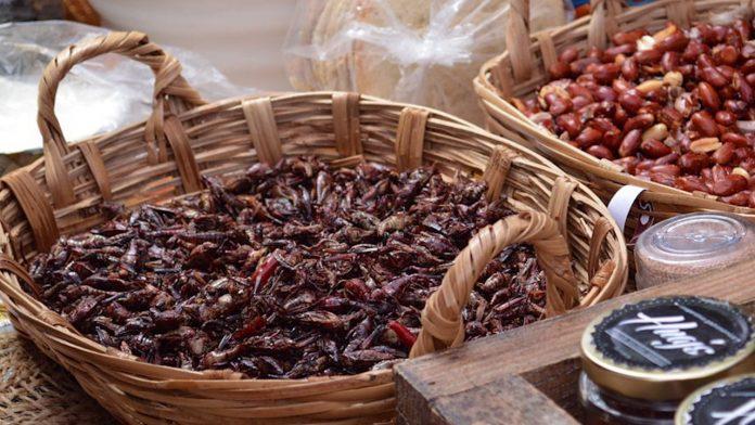 Böcek yemekleri