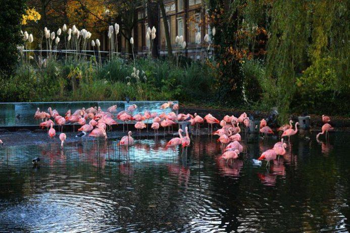 Amsterdam Artis Kraliyet Hayvanat Bahçesi