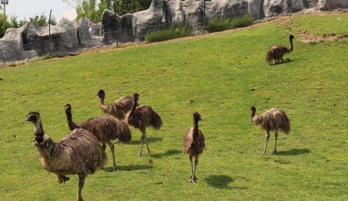 Eskişehie'de Eğlenceli Hayvanat Bahçesi