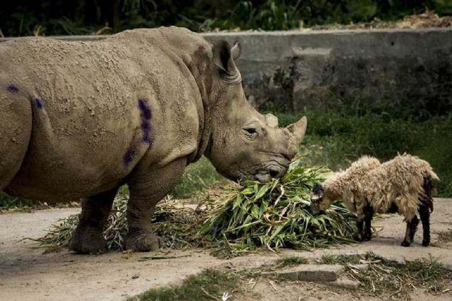 Bangladeş Ulusal Hayvanat Bahçesi