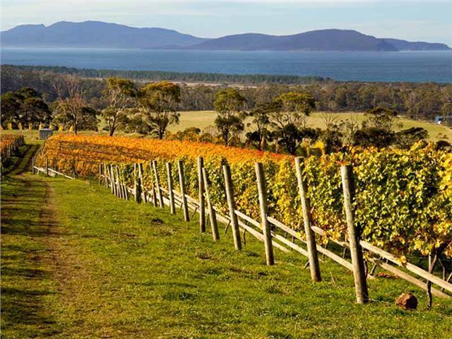 Tazmanya şarap vadileri