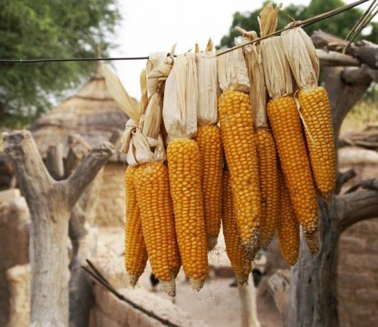 Burkina Faso'nun Geleneksel Yemekleri