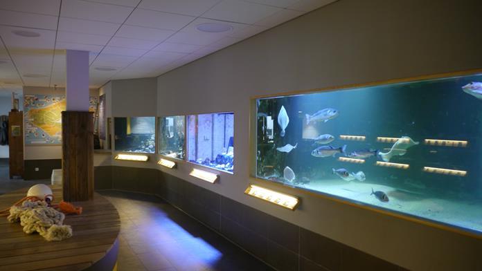 Nordsee Aquarium Borkum