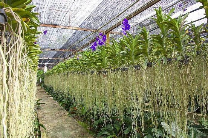 Siriporn Orchid Pattaya