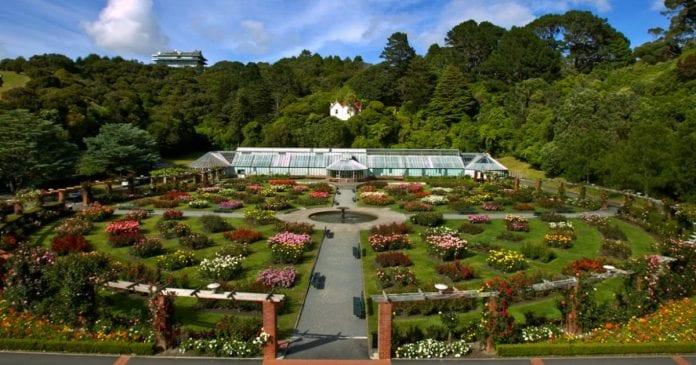 Leydi Norwood Gül Bahçesi