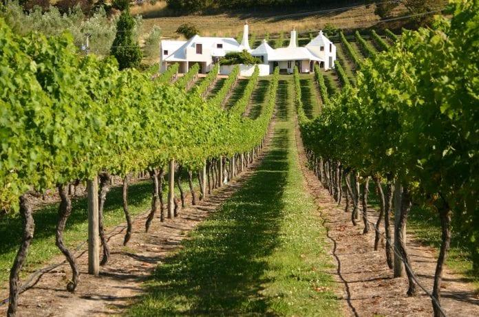 Martinborough Şarap Köyü