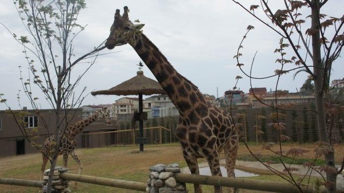faruk yalçın hayvanat bahçesi ve botanik park