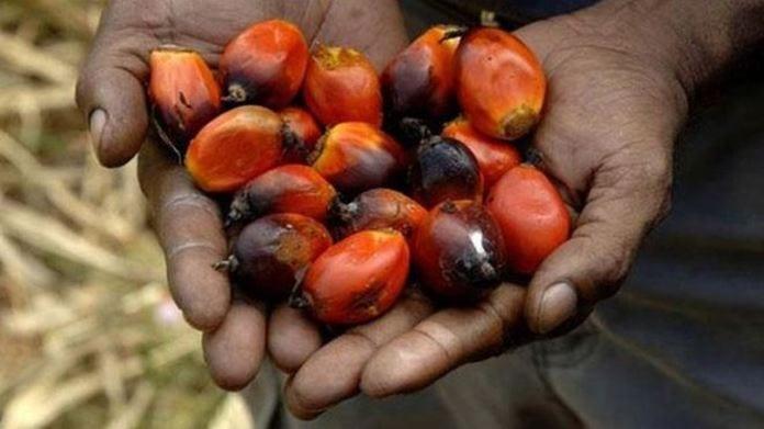 Palmiye Meyvesi